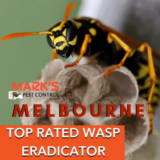 TOP-RATED-WASP-ERADICATOR-melbourne