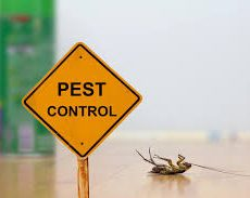 Pest Control manlly1