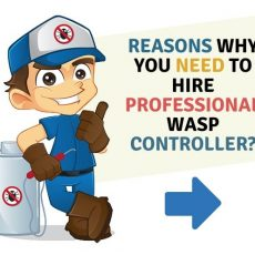 Reasons-Why-you-need-to-hire-professional-Wasp-controller
